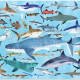 Puzzle '36 requins' 100 pcs CROCODILE CREEK