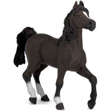 Cheval arabe, PAPO 51505