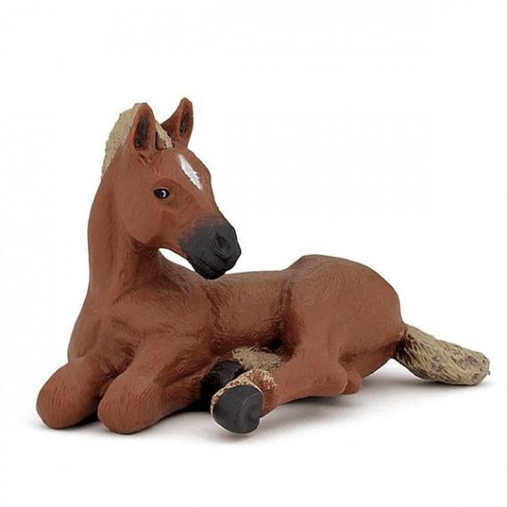Poulain Quarter horse, PAPO 51532